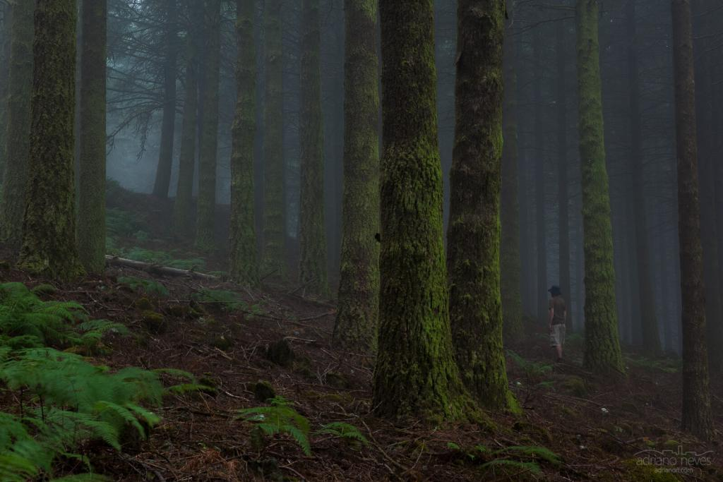 Floresta da Madeira - Fotografia de Viagem e Arquitetura por Adriano Neves - acseven - adrianon.com